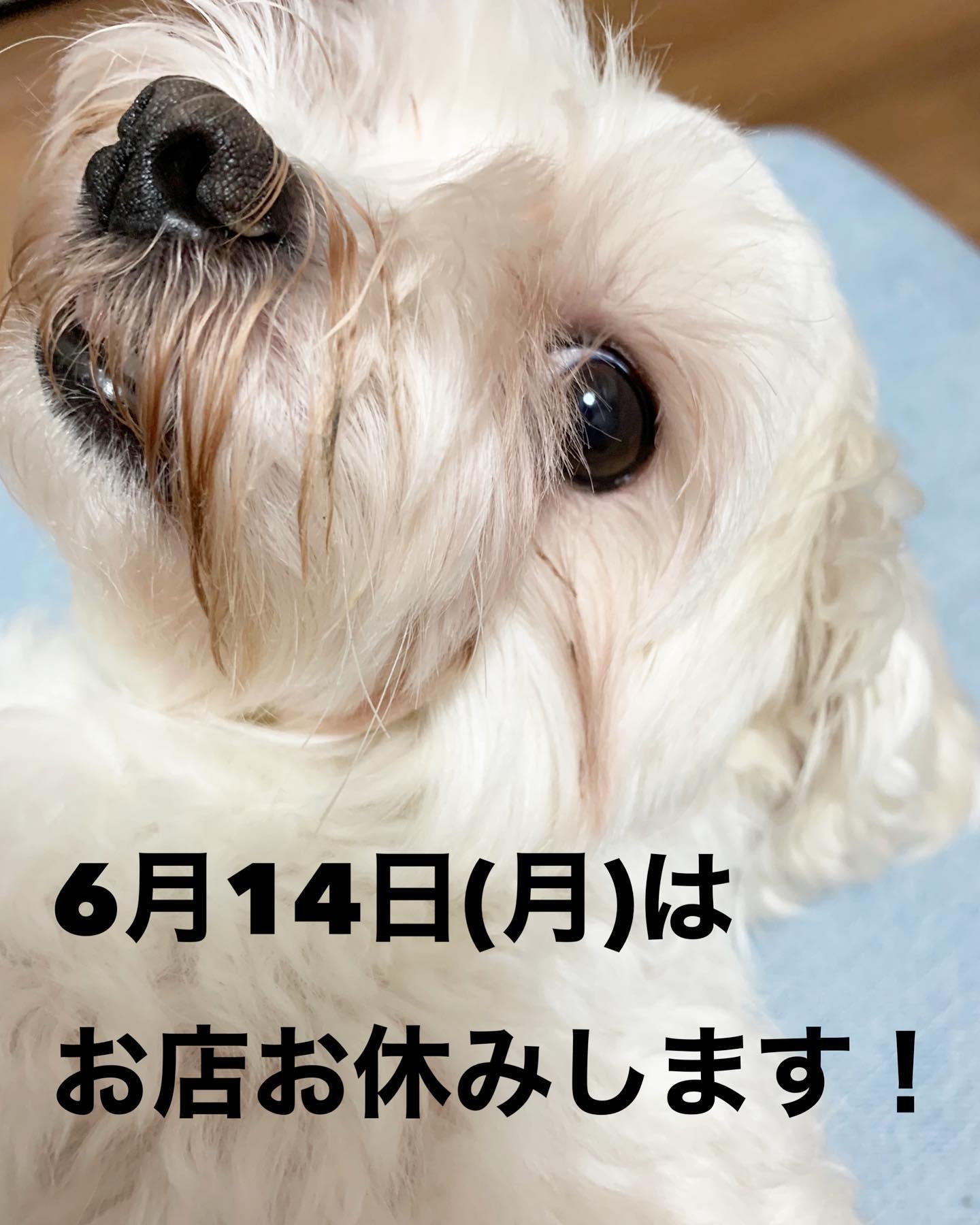6月14日(月)はお店お休みです!急ではありますが来週月曜日はテイクアウトも含めお休みをちょうだい致します!!緊急事態宣言明けるまで店内休業中です!テイクアウトとBASE通販とfoodデリバリーはやってます!FIKA COFFEE(フィーカ コーヒー)福岡県福岡市博多区下川端町3-1 博多リバレイン1FTEL0922926601営業時間→平日10:00〜18:30  土日祝10:00〜18:00店休日→不定休(早く閉めたり休んだりすることもあります)#福岡グルメ#福岡カフェ#博多#博多カフェ#中洲#博多座#福岡アジア美術館#クッキー#福岡クッキー#cookie#くまチョコミルク#ランチ#ティラミス#フレンチトースト#ummp#うむぷ#赤毛のマチコ#たま乗りジョニーのコーヒーゼリー#コーヒーゼリー#テイクアウト#サンドイッチ